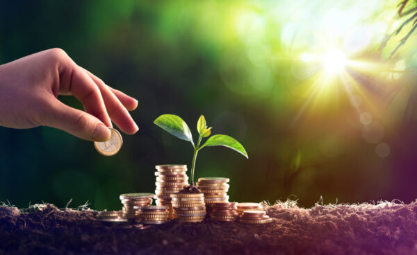 Growing Plant On Coins Money – Investment Concept